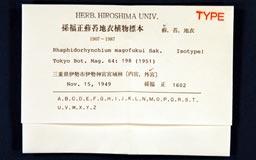 rhaphidorhynchium_magofukui5m.jpg
