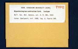 rhynchostegiumcontractum1m.jpg