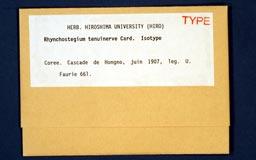 rhynchostegiumtenuinerve1m.jpg