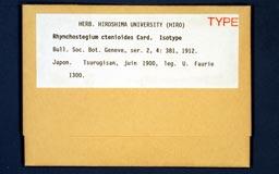 rhynchostegiumct1m.jpg