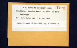 schlotheimiajaponicaO1M.jpg