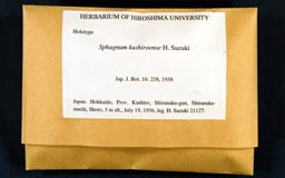 sphagnum_kushiroense1-1m.jpg