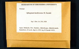 sphagnum_kushiroense2-1m.jpg