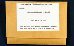 sphagnum_kushiroense3-1m.jpg
