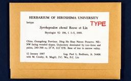 syrrhopodon_chenii1m.jpg