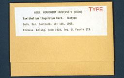 taxitheliumlingulatum1m.jpg