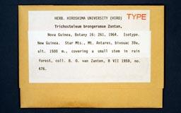 trichosteleumbronger1m.jpg